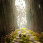 Alexandre Rotenberg, Two Sheep on Glorious Path